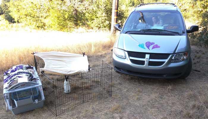 farm-rabbit-car